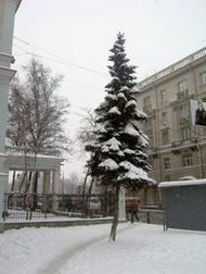 The winter view of the avenue Kamennoosotrovski
